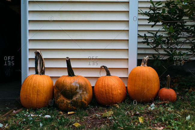 Orange pumpkins lined up in a row by the side of a house