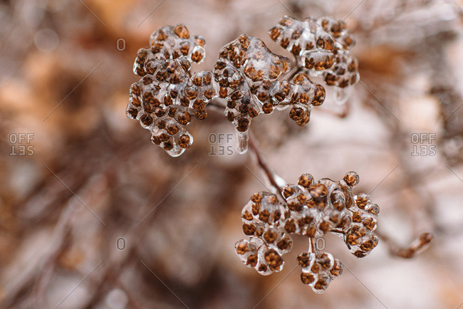 Ice covered branches in winter in Connecticut