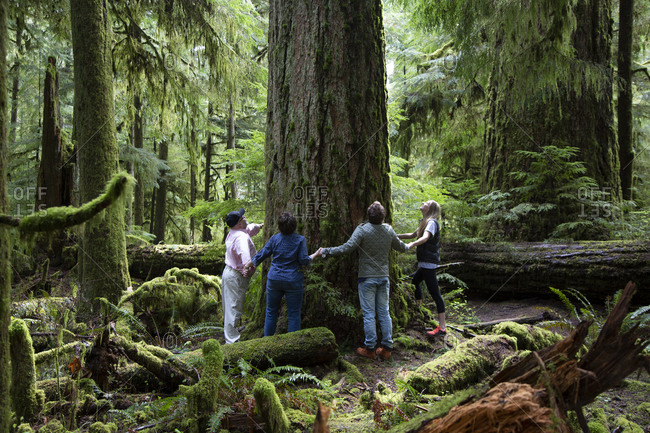 Vancouver, Canada - April 25th, 2015: People holding hands while surrounding a tree in Cathedral Grove forest park, Vancouver Island British Columbia, Canada