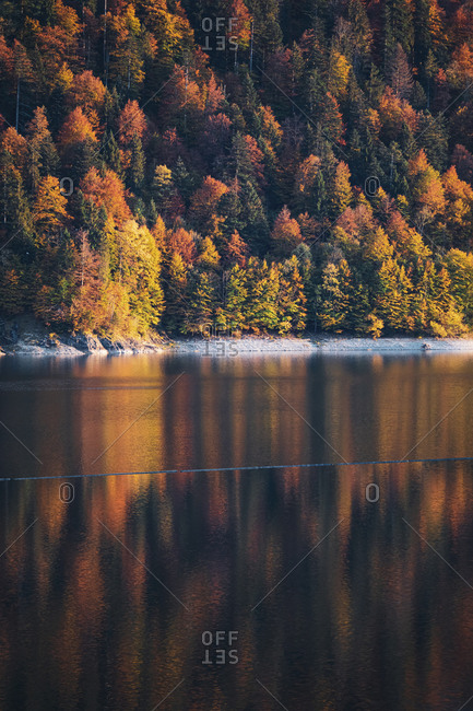 Sylvenstein lake against coniferous trees in forest during autumn in Upper Bavaria- Germany
