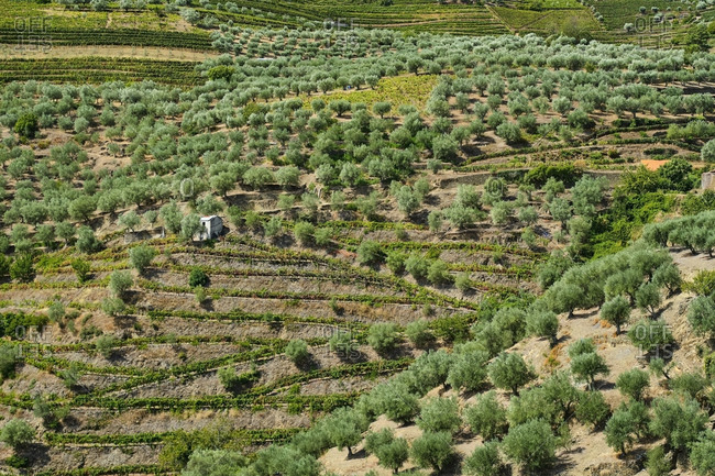 Portugal- Douro- Douro Valley- Wine region seen from air