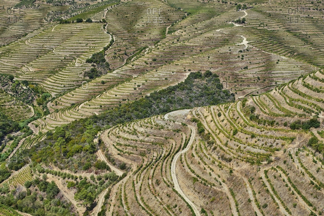 Portugal- Douro- Douro Valley- Wine region seen from above