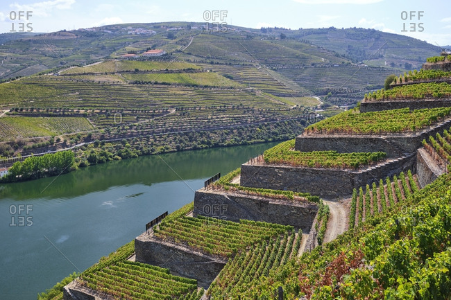 Portugal- Douro Valley- terraced vineyard overlooking Douro river