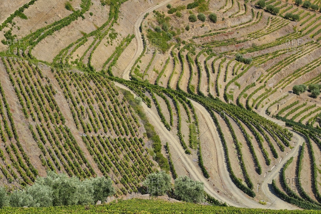Portugal- Douro Valley- terraced vineyard
