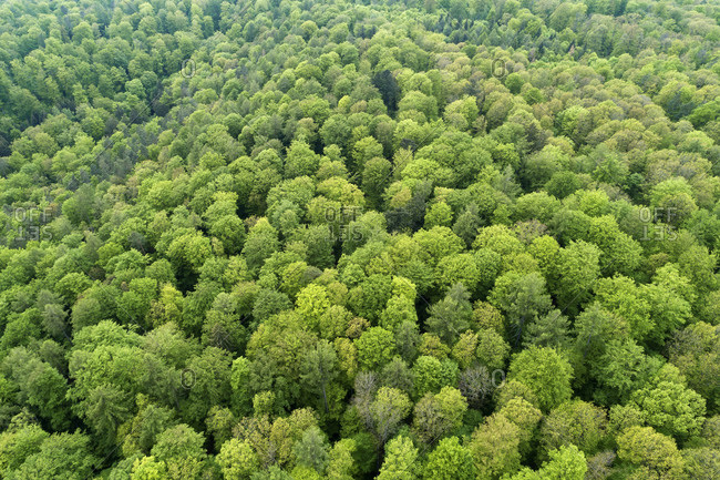 Germany- Bavaria- Steigerwald- Aerial view of vast deciduous forest in early spring