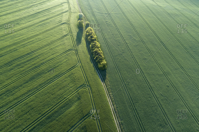 Germany- Mecklenburg-Western Pomerania- Aerial view of dirt road between green vast wheat fields in spring
