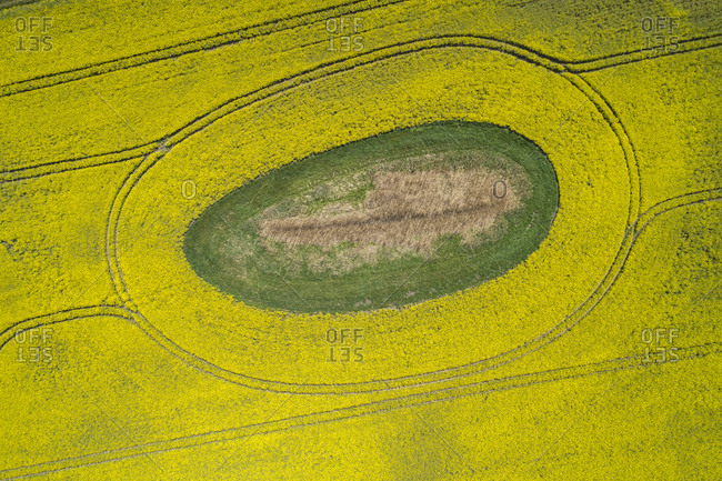 Germany- Mecklenburg-Western Pomerania- Aerial view of vast rapeseed field with green oval inside