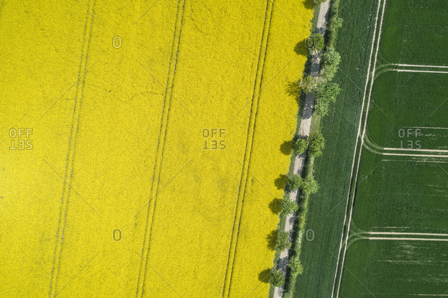 Germany- Mecklenburg-Western Pomerania- Aerial view of treelined dirt road through rapeseed and wheat fields in spring