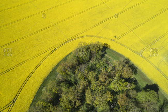 Germany- Mecklenburg-Western Pomerania- Aerial view of vast rapeseed field around edge of forest in spring