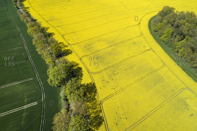 Germany- Mecklenburg-Western Pomerania- Aerial view of row of trees between wheat and rapeseed fields in spring
