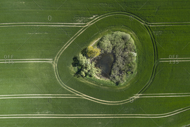 Germany- Mecklenburg-Western Pomerania- Aerial view of trees and pond in middle of vast wheat field