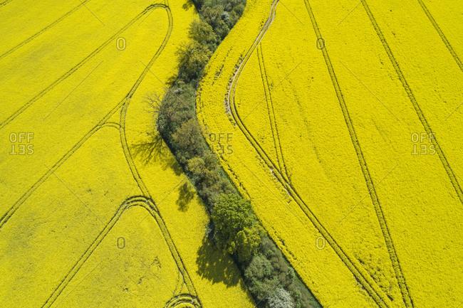 Germany- Mecklenburg-Western Pomerania- Aerial view of row of trees between vast rapeseed fields in spring