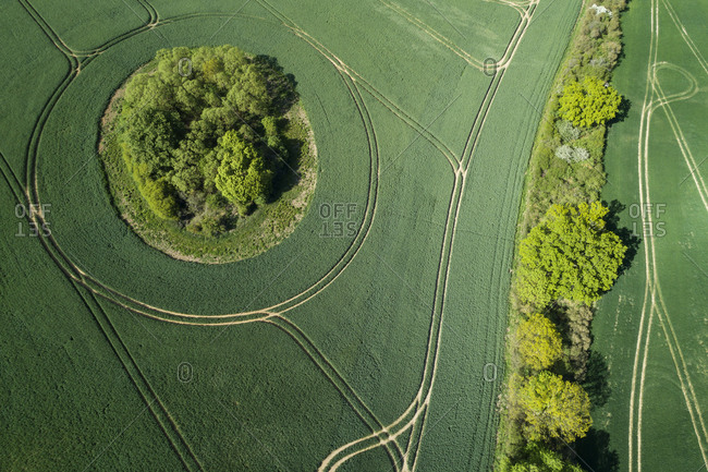Germany- Mecklenburg-Western Pomerania- Aerial view of green vast wheat fields in spring