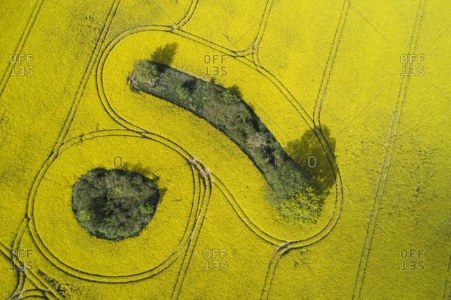 Germany- Mecklenburg-Western Pomerania- Aerial view of vast rapeseed field with trees growing in small green patches inside