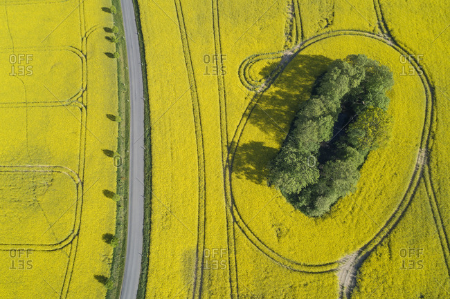 Germany- Mecklenburg-Western Pomerania- Aerial view of empty highway between vast rapeseed fields in spring
