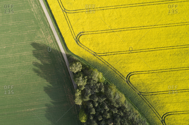 Germany- Bavaria- Aerial view of dirt road between rapeseed and wheat fields in spring