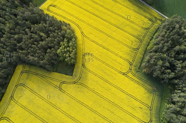 Germany- Bavaria- Aerial view of vast rapeseed field in spring