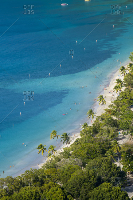 Aerial view of palm trees growing at Magens bay beach- St. Thomas- US Virgin islands