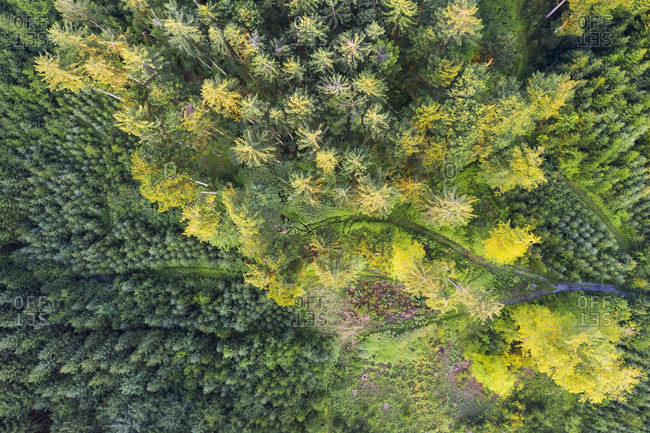 Aerial view of forest with reforestation near Dietramszell- Tyler Land- Upper Bavaria- Bavaria- Germany