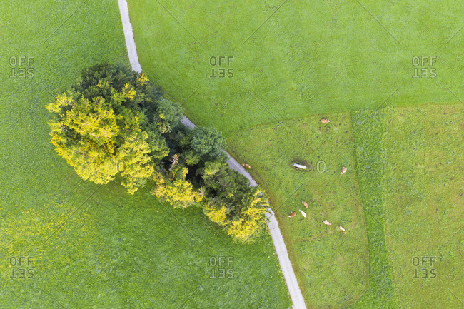 Aerial view of cows at pasture- Peretshofen near Dietramszell- Tyler Land- Upper Bavaria- Bavaria- Germany