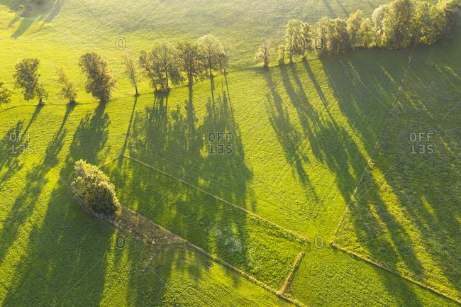 Aerial view of trees with long shadows on meadow at Wackersberg- Isarwinkel- Upper Bavaria- Bavaria- Germany