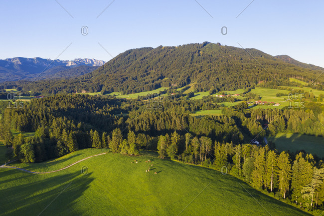 Aerial view of cow pasture and forest near Wackersberg- Isarwinkel- Upper Bavaria- Bavaria- Germany