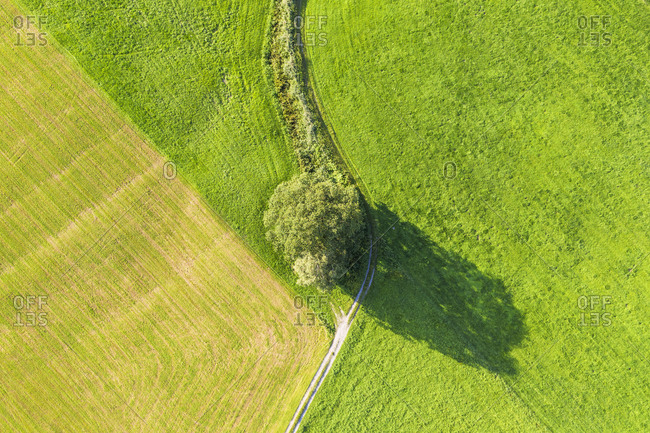 Aerial view of tree and path on meadow at Bichl- Upper Bavaria- Bavaria- Germany