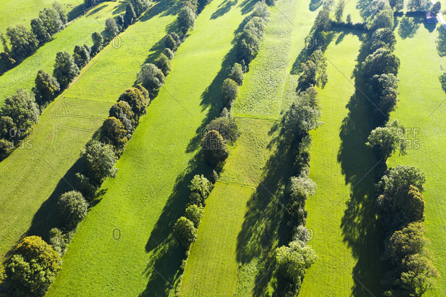 High angle view of Natural monument hedge landscape- Gaissach- Lenggries- Isarwinkel- Upper Bavaria- Bavaria- Germany