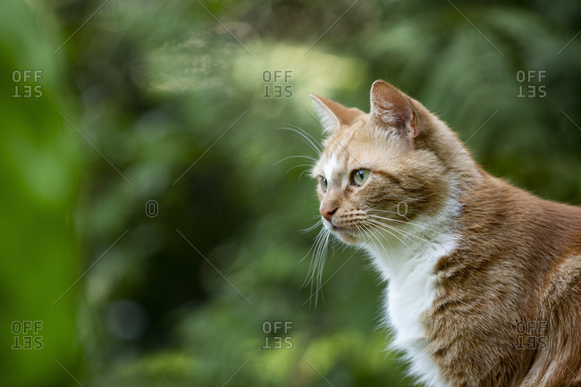Germany- North Rhine-Westphalia- Essen- Portrait of brown cat sitting in meadow