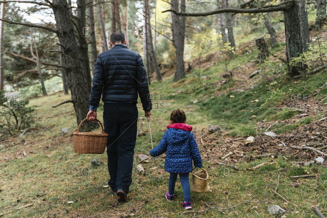 Father and daughter walking in the woods with stick and basket looking for mushrooms