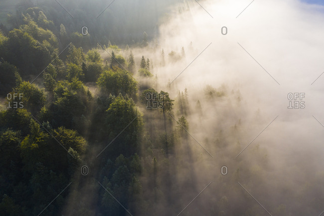 Germany- Bavaria- Mittenwald- Aerial view of forest shrouded in morning fog