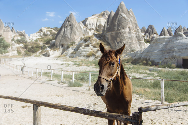 Brown horse standing on land against mountains in Goreme- Cappadocia- Turkey