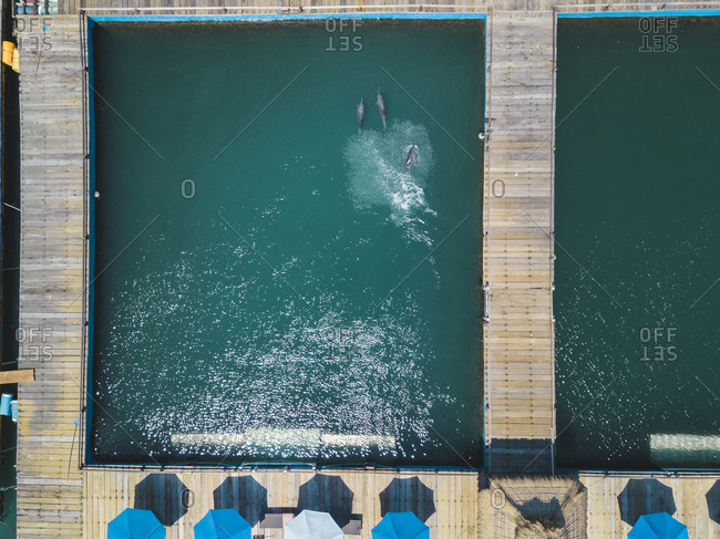 Aerial view of dolphins swimming in dolphinarium at Bali- Indonesia