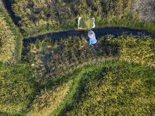 Aerial view of male farmer working in rice paddy- Bali- Indonesia