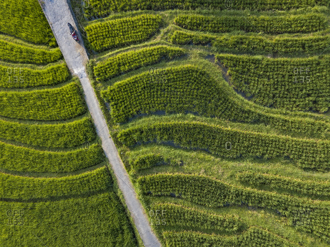 Aerial view of road amidst agricultural field- Bali- Indonesia