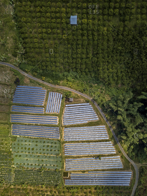 Aerial view of farm at Bali island- Indonesia