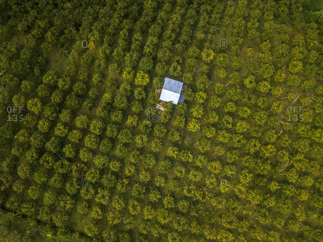 Aerial view of orange trees growing in farm- Bali- Indonesia