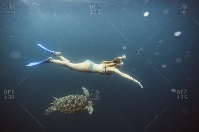 Indonesia- Bali- Underwater view of female diver swimming alongside lone turtle
