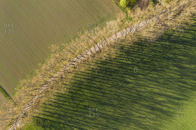 Aerial view of trees with shadow on grassy land at Icking- Germany