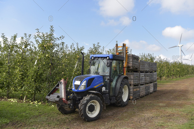 Tractor with boxes of harvested apples on a fruit plantation