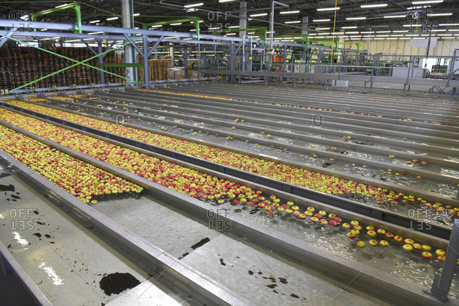 Conveyor belt with apples - Offset