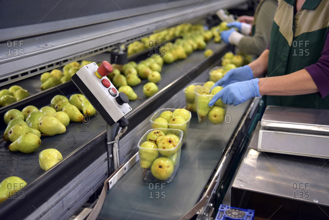 Industrial packaging of pears in plastic bowls