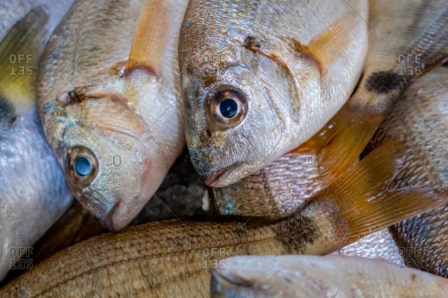Seabream in Algarve Fish Market, Portugal