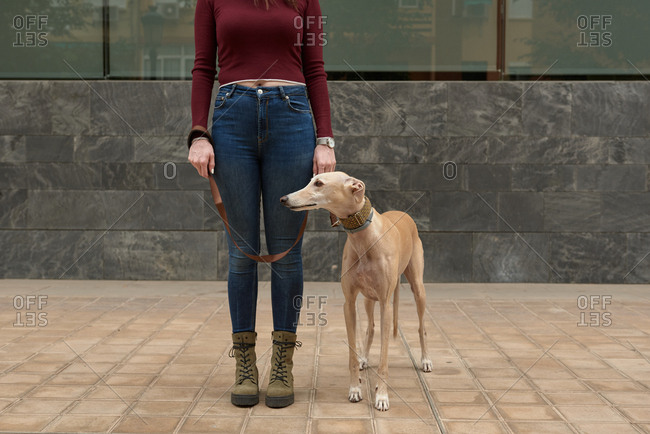 Woman with her greyhound dog on the street