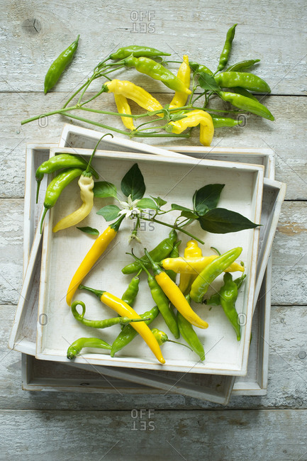 Overhead view of yellow and green chilies (Capsicum) with leaves and flowers on rustic wooden background