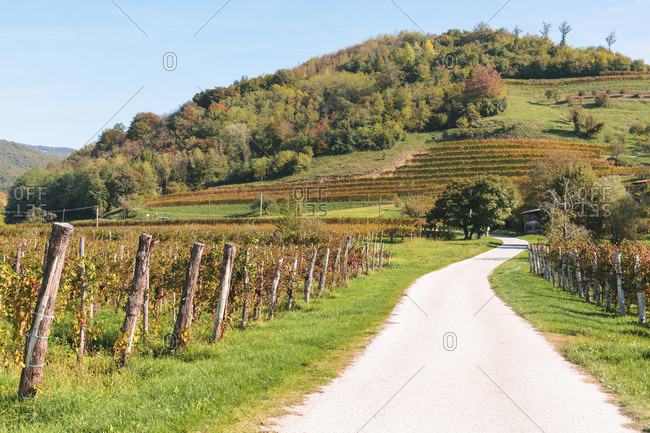 Slovenia-Ljubljana- Empty dirt road along countryside vineyard