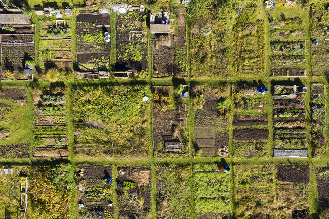 Germany- Bavaria- Geretsried- Aerial view of rows of community gardens