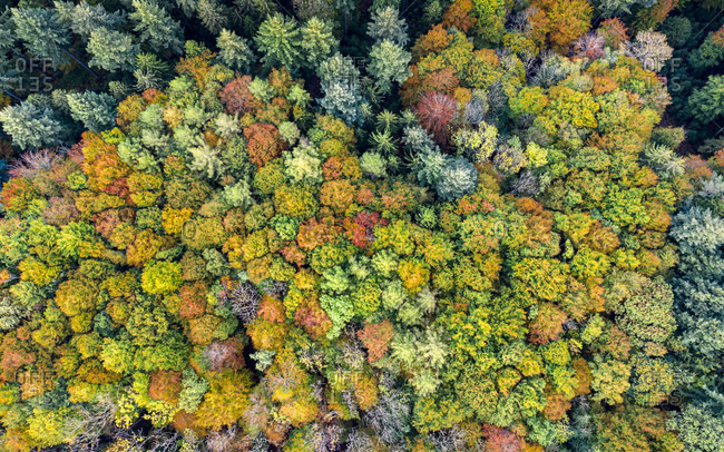 Germany- Baden-Wurttemberg- Aerial view of Swabian-Franconian Forest in autumn