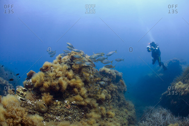 France- Corsica- Scuba diver photographing corals growing on sea bottom