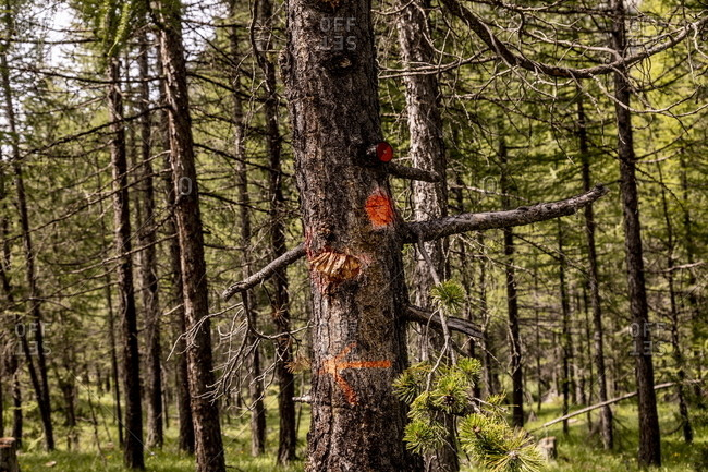 Tree with arrow and reflectors in the French Alps